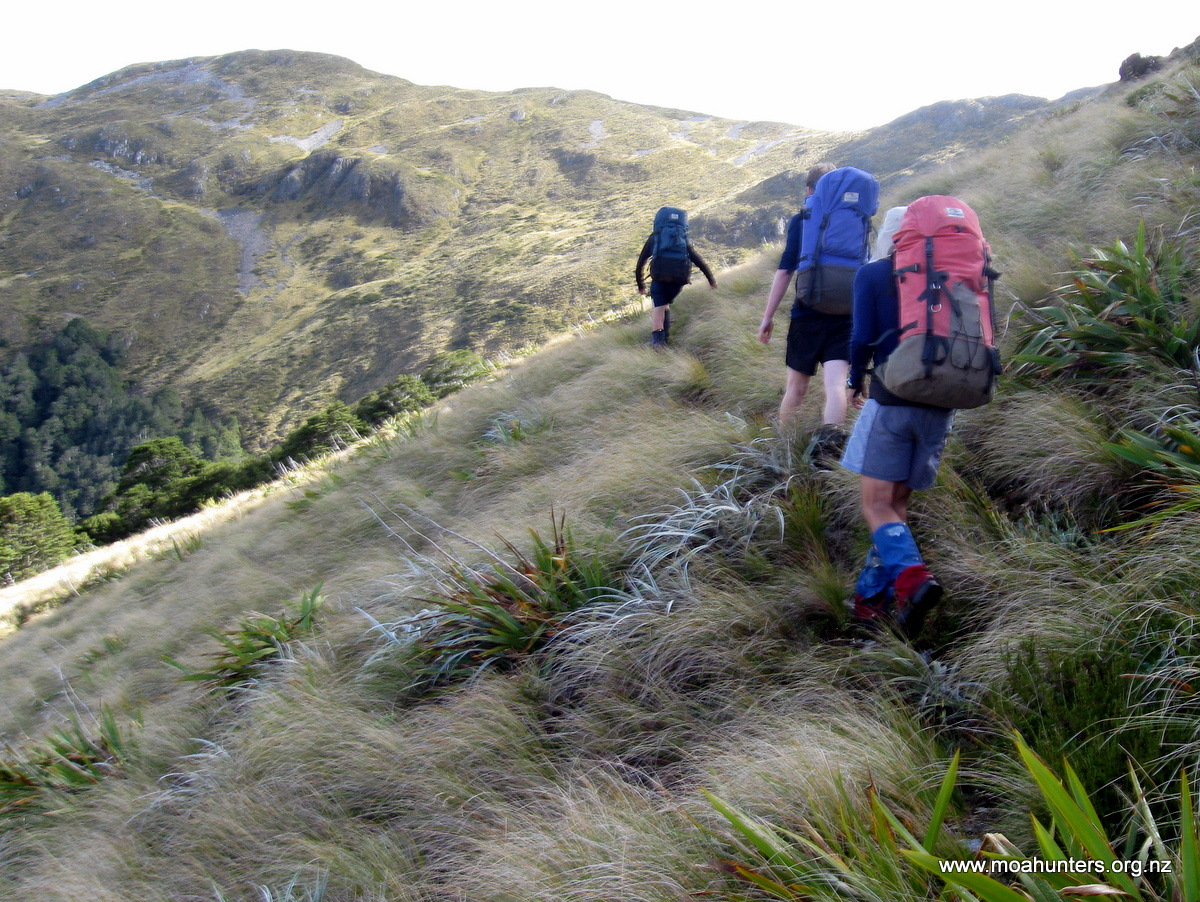 Open country of Biggs Tops above the Wangapeka Saddle