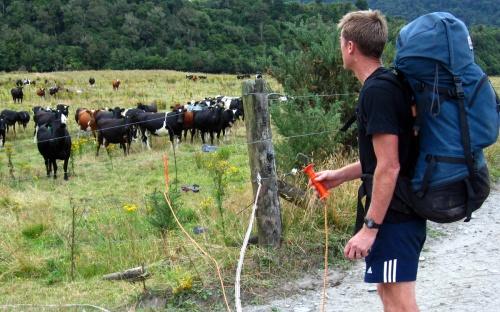 No, it isn't milking time, ladies....
