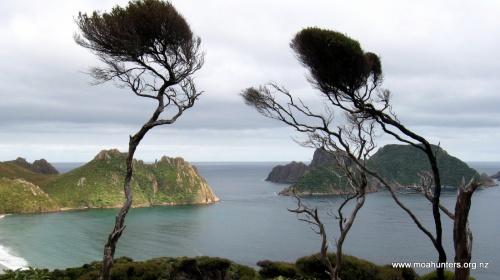 Windswept kanuka frame the Ruggedy Islands