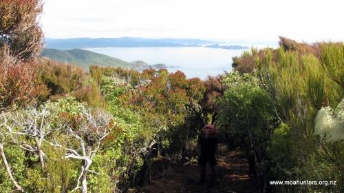 Looking south back towards Mason Bay