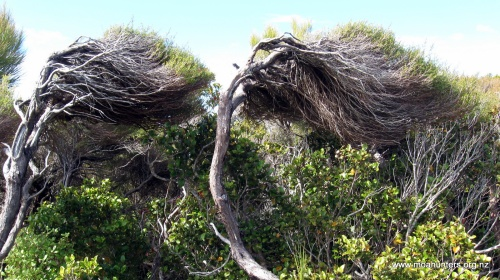 Westerly winds blow almost constantly across Stewart Island.
