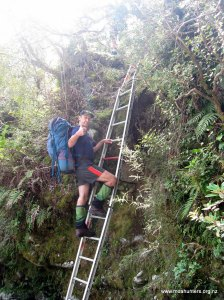 Up the ladder, full of cake